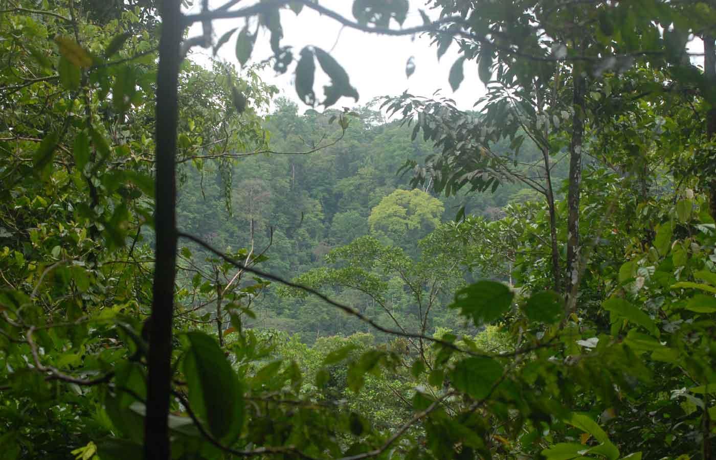 Bosque Estacion de Campo