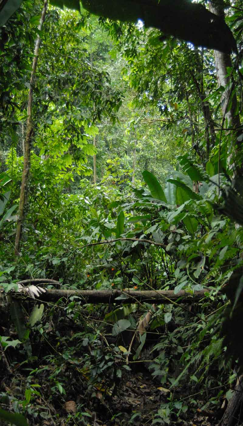 the importance of protecting rain forests Have students share their arguments about the importance of protecting biodiversity in the amazon rain forest with the class students with the same region should present following each other so students can compare the different pieces of evidence and reasoning they used to support their claim.